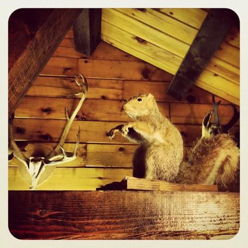 Buddy's Log Cabin in Pine Grove, PA