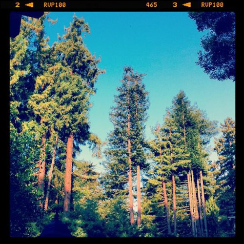 Oak Tree Ristorante in Felton, CA