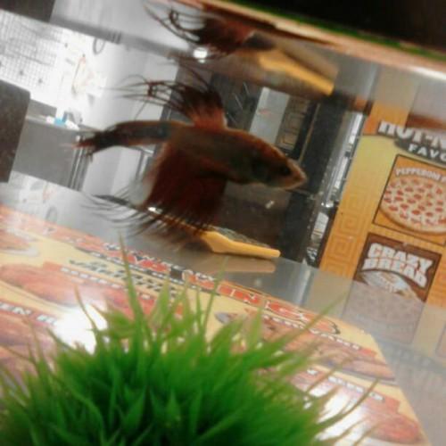Jun 07, · Little Caesars, Evansville: See 4 unbiased reviews of Little Caesars, rated of 5 on TripAdvisor and ranked # of restaurants in Evansville/5(4).