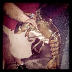 Gulf Pride Seafood Inc in Franklin, TN