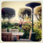 The Cat and Custard Cup in La Habra, CA