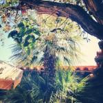 Tohono Chul Park in Tucson
