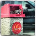 McDonald's in Magnolia