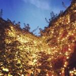 Sophia's Grotto in Roslindale, MA