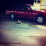 Sonic Drive-In in Tulsa
