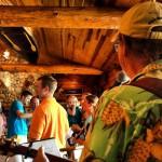 Log Jam in Grand Ledge, MI