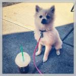 Starbucks Coffee in Eagan