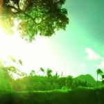 Rainbow Drive-In in Honolulu, HI