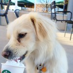 Starbucks Coffee in Denver, CO
