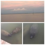 Rc Otters-Captivia in Sanibel