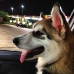 Sonic Drive-In in Richmond, TX