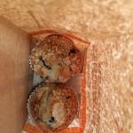 Dunkin Donuts in Newington