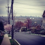 Chanterelles in Wood Ridge, NJ