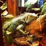 Winking Lizard in Bedford