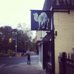 Black Camel in Toronto
