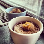 Academy Pizza in Edmonton