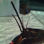 Red Lobster in Tyler, TX