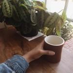 Bodhi Coffee in Philadelphia