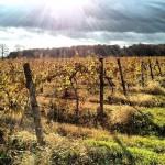 Klingshirn Winery in Avon Lake