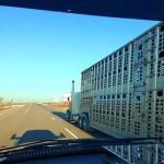 Sirloin Stockade in Murray