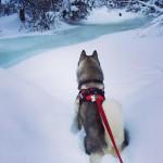 Arctic Roadrunner in Anchorage, AK